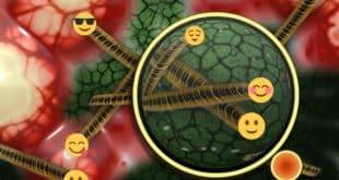 Was ist die Darmflora Einfach erklärt